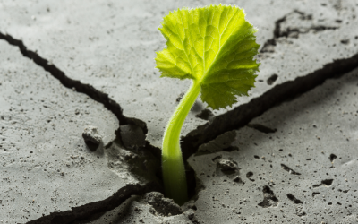How to Foster a Spirit of Resilience
